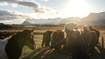 Manue tente de faire ami ami avec les chevaux