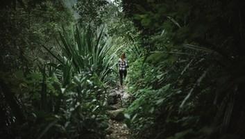 Dans la jungle luxuriante