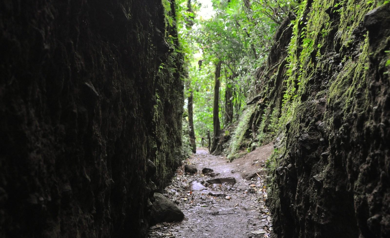 Tunnel dans la cloud forest du Nicaragua Mombacho