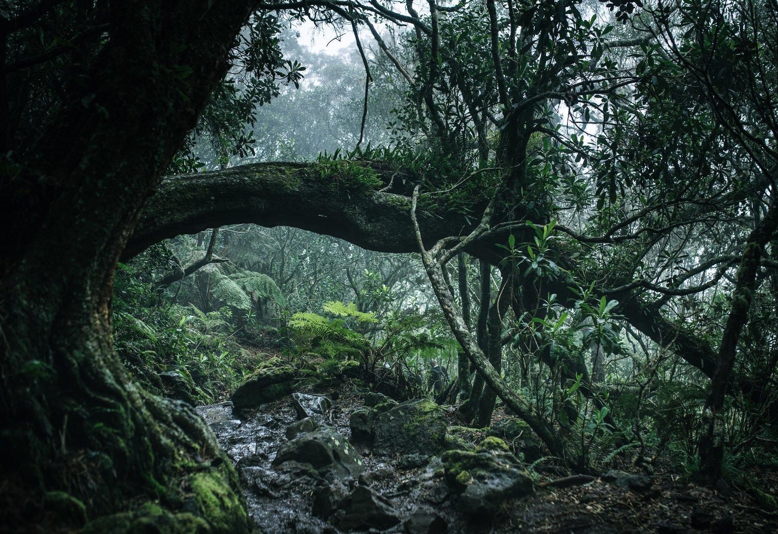 Quand la nature envahit tout, La Réunion  Piton des Neiges