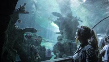 L etonnant aquarium de malte