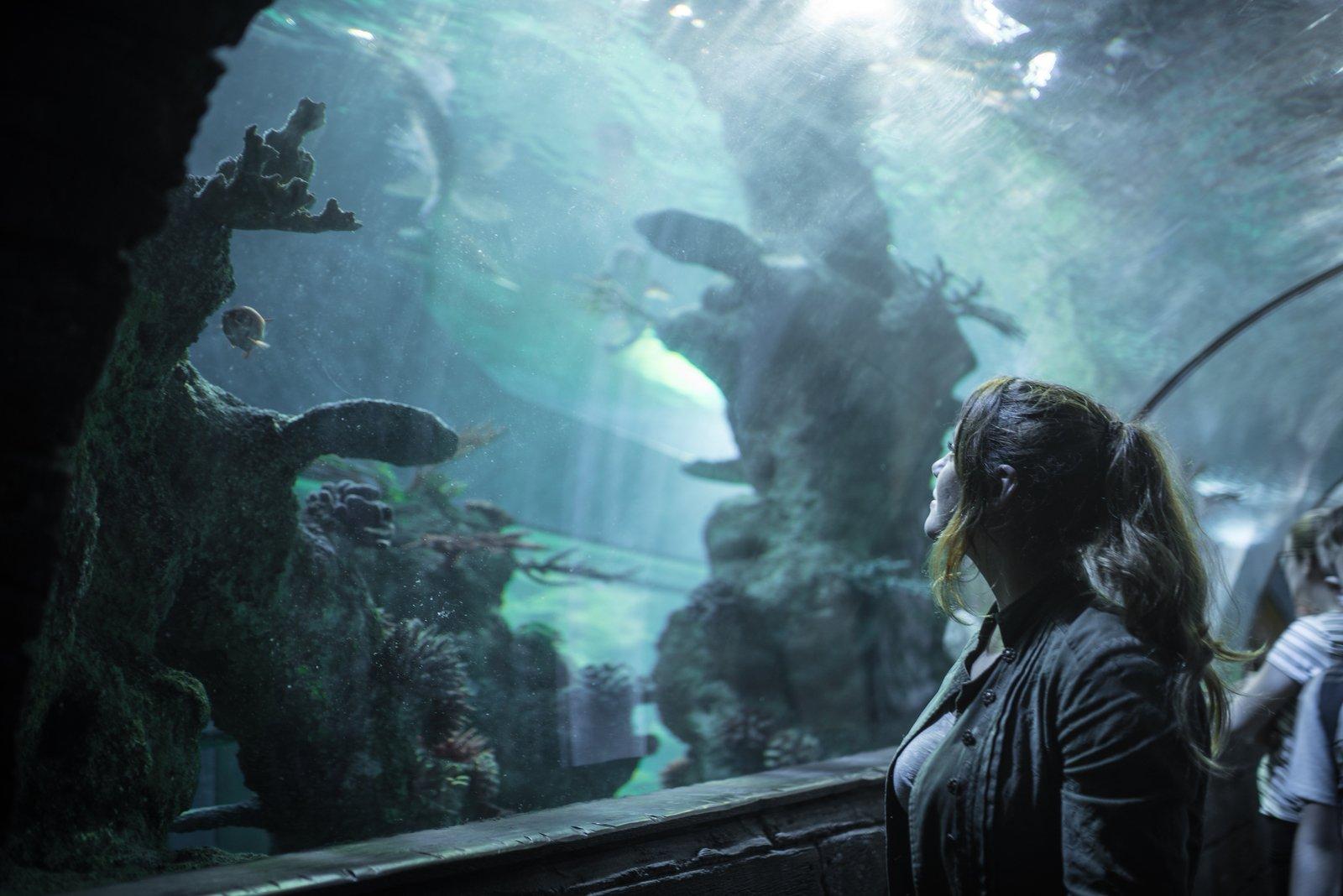 L'étonnant Aquarium de Malte Baie de St Paul