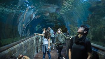 L aquarium de malte