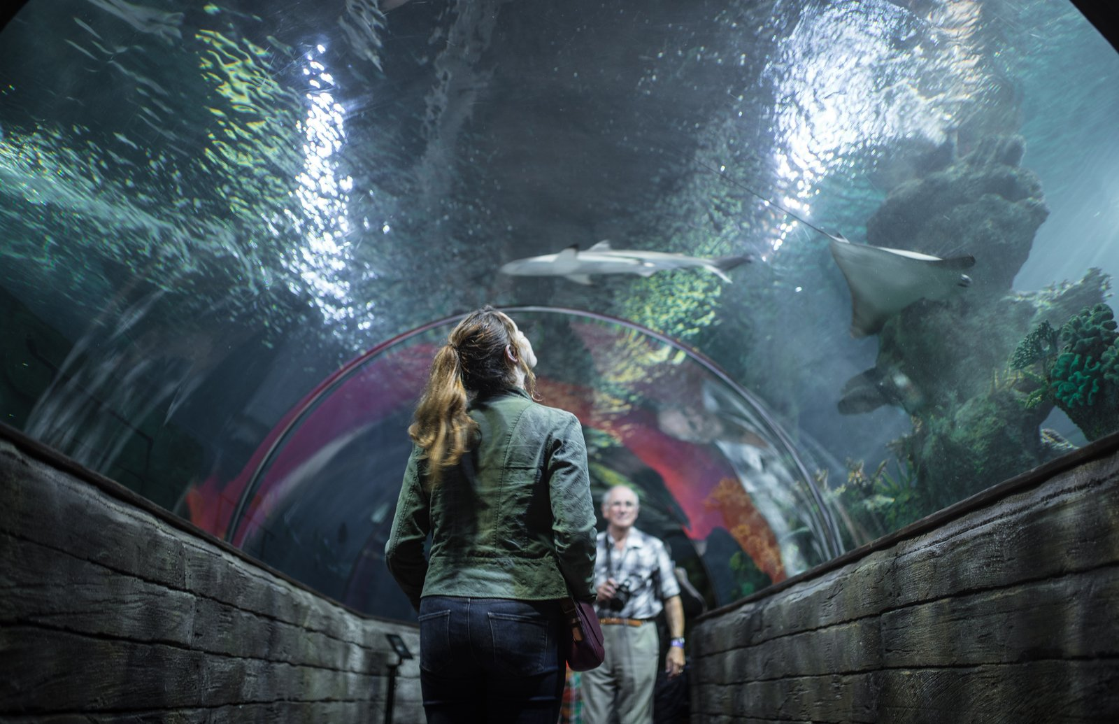Tunnel de l'aquarium de Malte Baie de St Paul