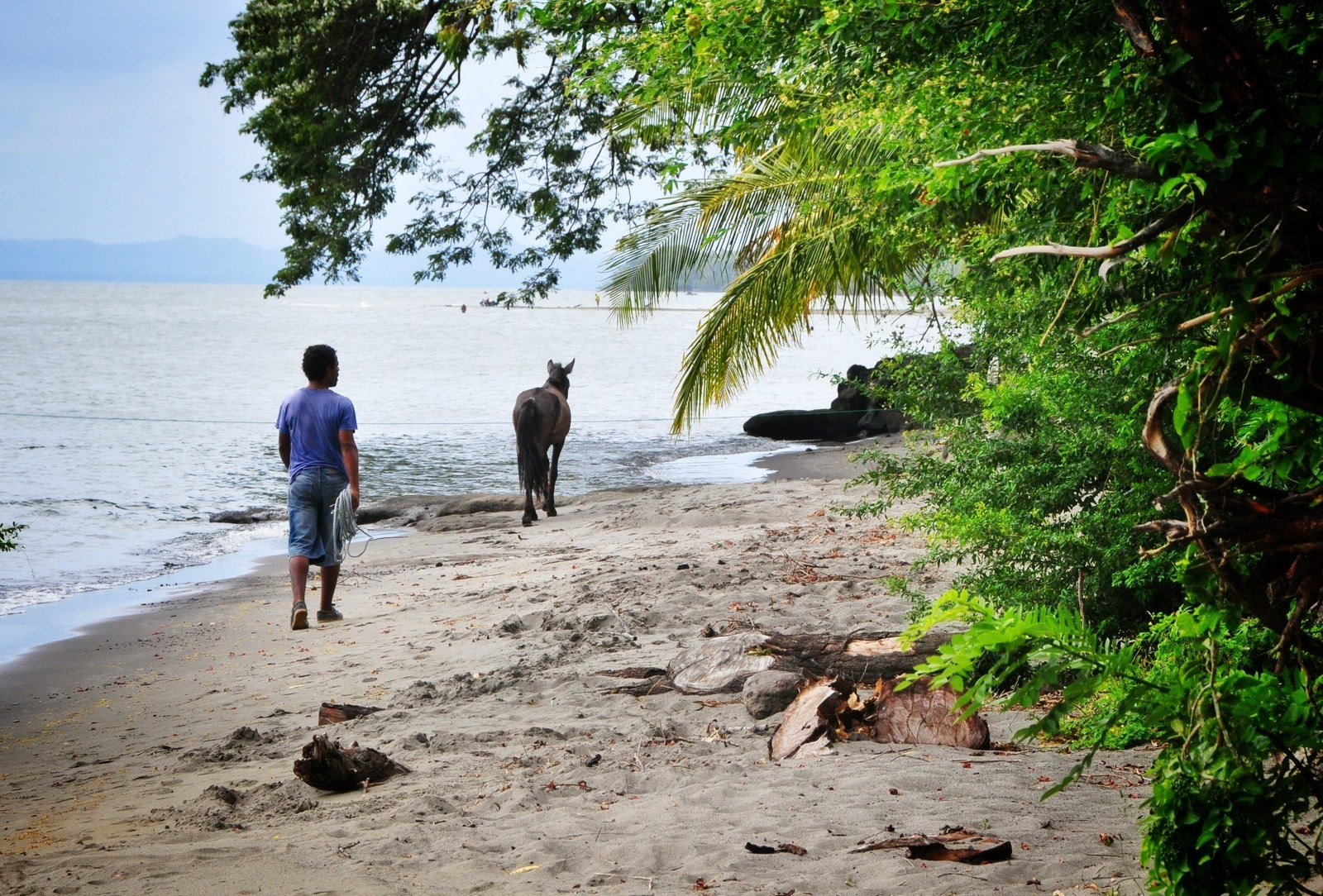 Chevaux. Ometepe, Nicaragua Ometepe