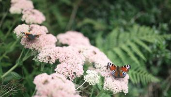 Les papillons par centaines au parc botanique