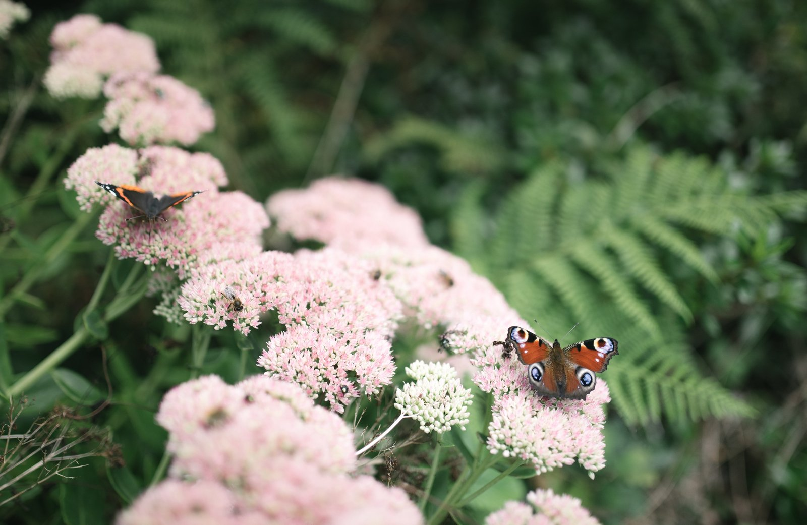Les papillons par centaines, au parc botanique Le Chatellier
