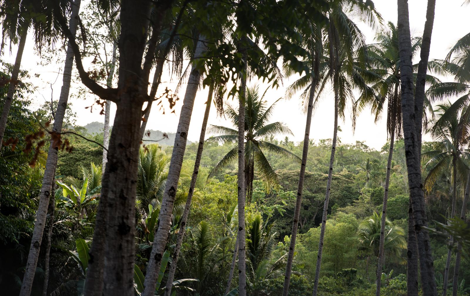 Jungle, Bohol Loboc