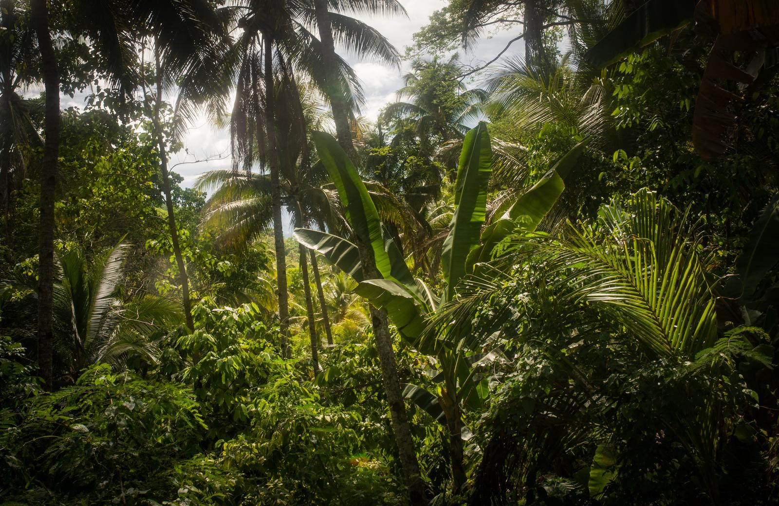 La jungle depuis notre hôtel Loboc